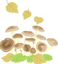 キノコ栽培体験