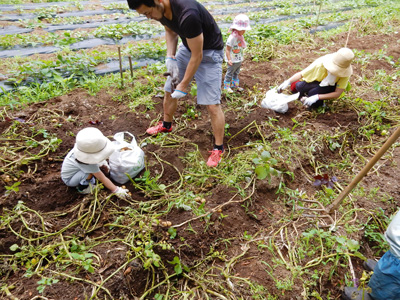 ジャガイモ収穫とジャガイモ料理