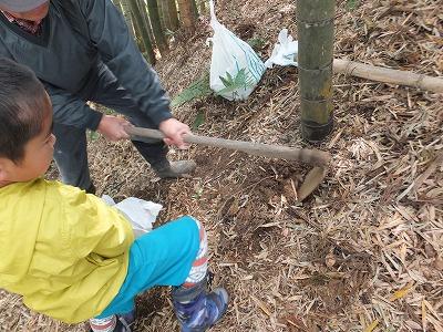 タケノコ収穫体験