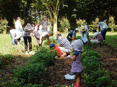落花生の収穫体験