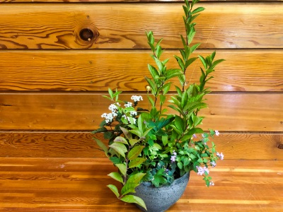 古賀有子先生による「~ガーデンKOGA流~寄植え教室」